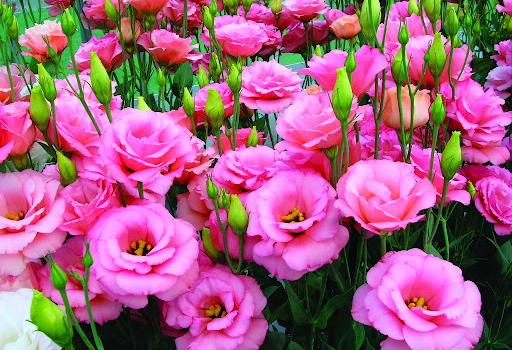 hoa-phong-thuy
