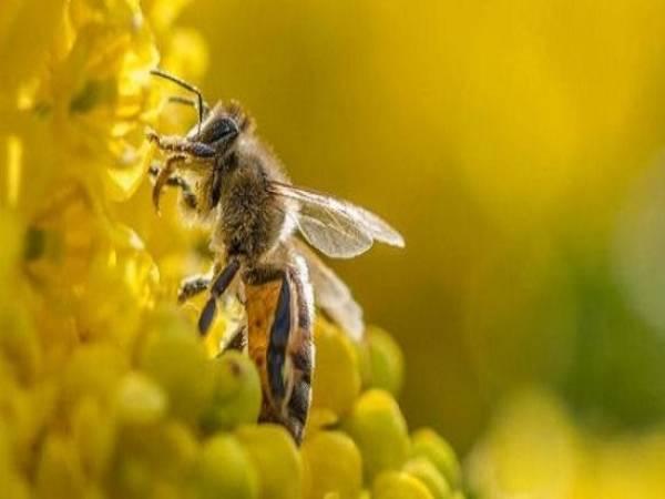 ngu mo thay con ong